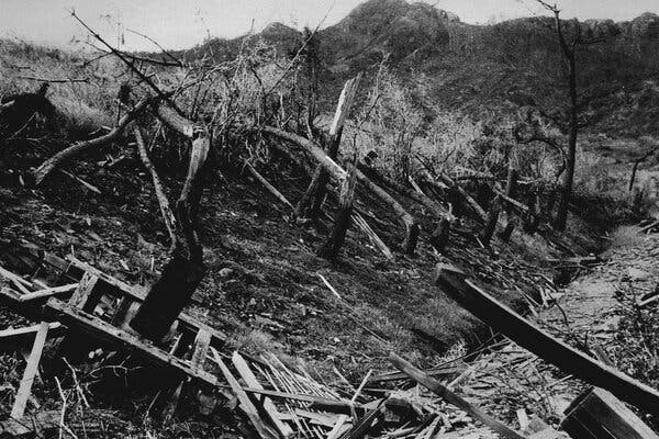 Tree trunks in October 1945 that had been knocked down by the blast in Nagasaki.