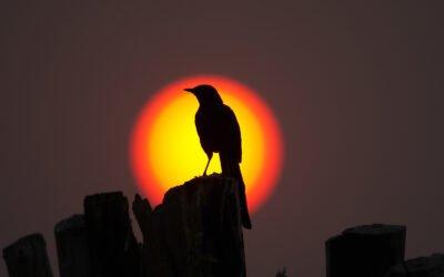 """De Sun Do Move and De Earth Am Flat"" — Reverend John J. Jasper (a Sermon)"
