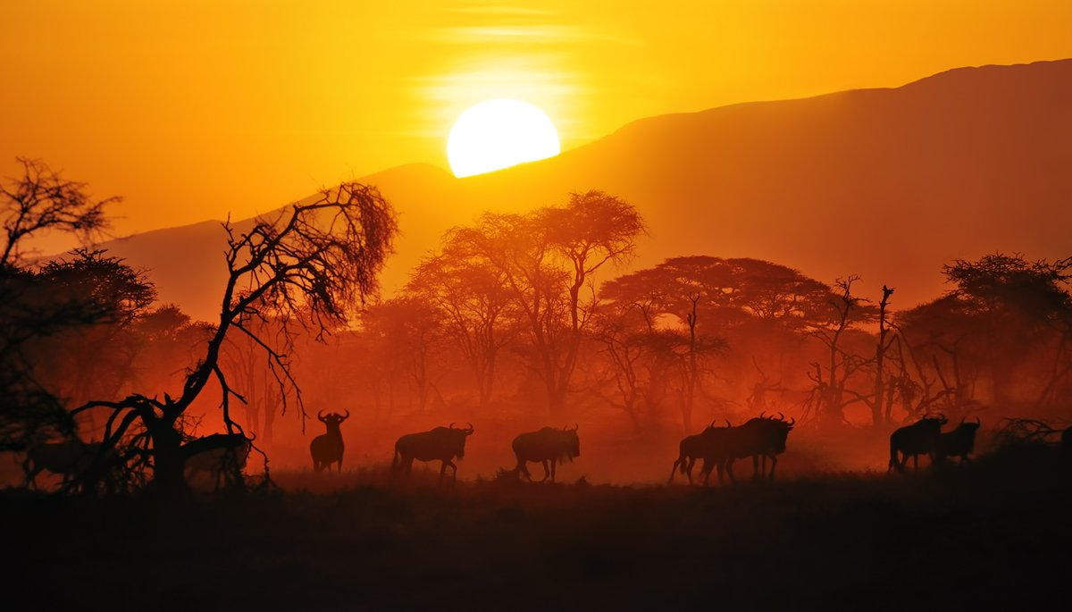 Wildlife photography in East Africa: Digital Photography Review