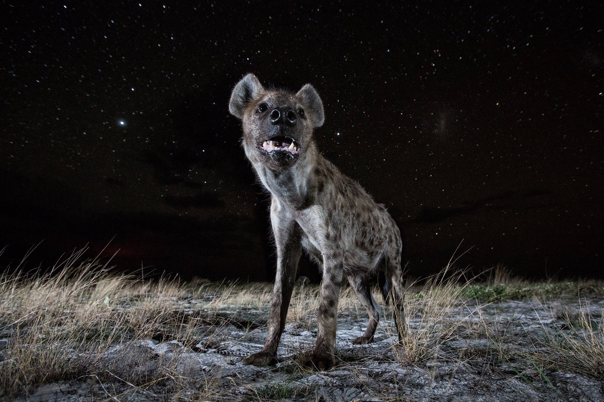 Photo story of the week: Hyena at Night: Digital Photography Review